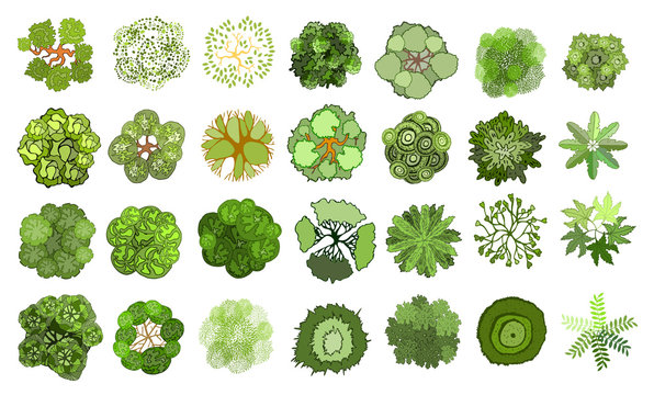 Set of colored hand drawn stylized top view trees and plants. Graphic, isolated on white, vector.