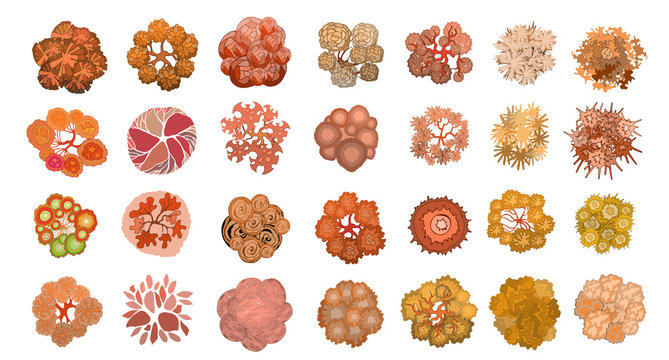 Set of colored hand drawn stylized top view autumn trees and plants. Graphic, isolated on white, vector.