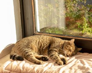 getigerte Hauskatze schläft auf der Fensterbank