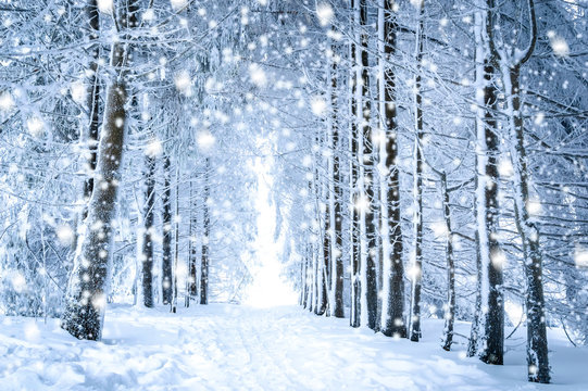 Magical winter landscape: path in the snowy forest with falling snow