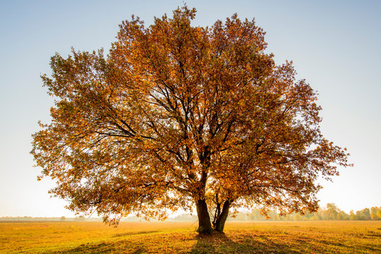 lonely tree in a field in autumn