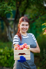 Image of happy girl gardener with harvest of apples in wooden box in garden