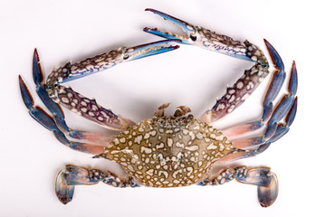 Raw chesapeake blue crab, Blue crab, Blue swimmer crab Or Blue manna crab on white background