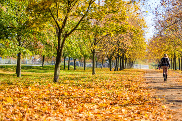 Lonely young woman walking in a city park on autumn Wall mural