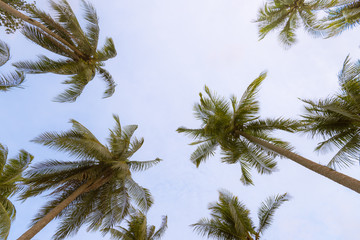 Coconut palms and the blue sky