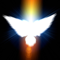 Holy sign of a white dove