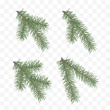 Set of realistic fir branches. Christmas tree or pine. Conifer branch symbol of Christmas and New Year isolated on transparent background. Vector illustration