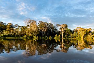 The Amazon rainforest of Peru at Parcaya Samiria
