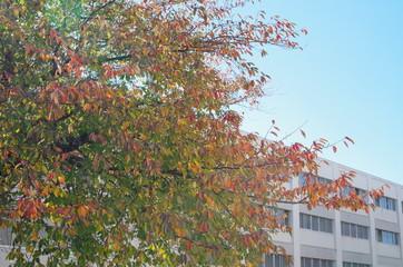建物と紅葉