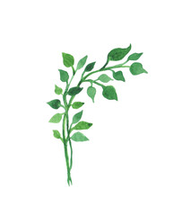 Hand painted watercolor graphic design element. Green leaves on a branch.