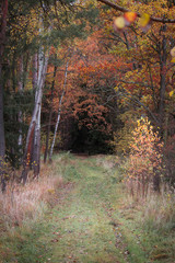 Autumn path in forest, colored photo