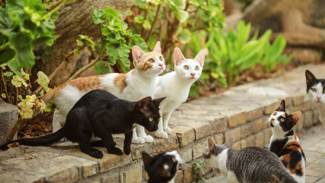 Group of stray cats sitting on pathway curb, looking up as someone is about to throw them some food.