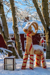 Snowy Christmas goat at Christmas