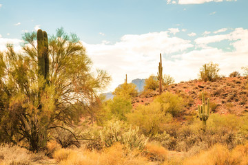 Landscape photography of the peacefulness of the Sonoran desert near Phoenix, Az along with cactus and bright clean air