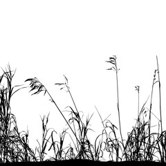 Realistic grass silhouettes from nature (Vector illustration).