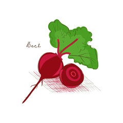 Beet. Vegetable. Sketch, Doodle. On a white background.