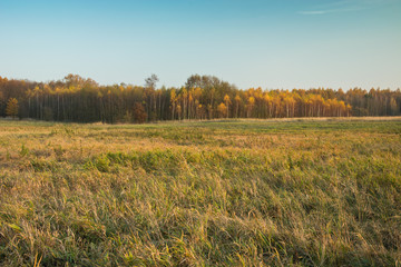 Big meadow, autumnal yellow forest and blue sky