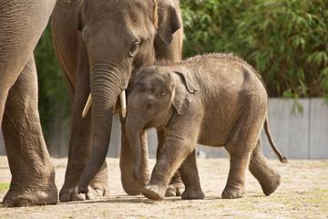 Türaufkleber Elefant Baby Aziatische olifant speelt bj oeder in de buurt