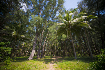 Beautiful landscape with a pathway surrounded by green palm trees, Phuket, Thailand.
