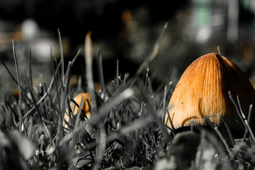 Close-up on a brownish mushroom in pale grass with blurry background