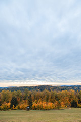 autumn landscape with trees and blue sky