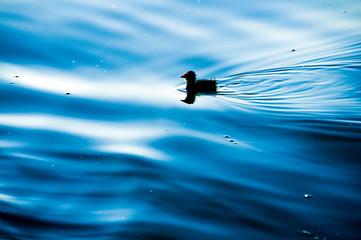 Alone into the Lake