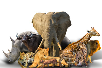 Big Five and wild african animals collage isolated on white background. African safari scene. Wallpaper composition background on white. Copy space.