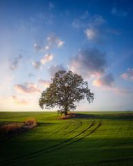 Einsamer Baum zum Sonnenuntergang