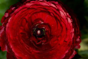 Flower, red, yelloe, pink