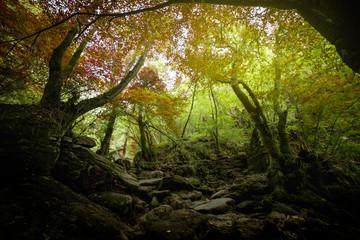 bosque de eume