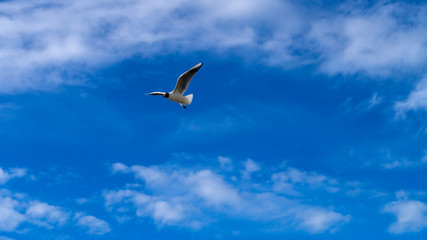 Beautiful gull flies in the sky among the clouds.