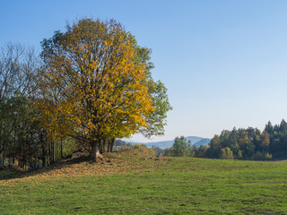 green meadow with autumn colorful forest and yellow linden tree and hills, landscape in luzicke lusitian hory mountain, blue sky background