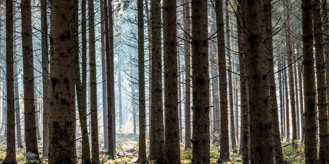 Keuken foto achterwand Bos in mist Wald zwischen Trossingen und Deisslingen