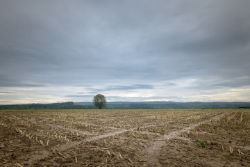 Harvested corn field lying in the dark Ardennes Belgium