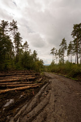 Big pine logs laying beside the road in the dramatic and rainy weather of the Ardennes Belgium