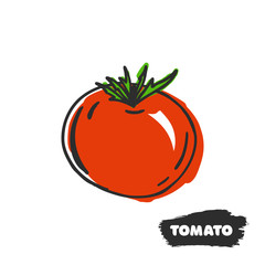 Vector illustration of hand drawing red tomato on white background.