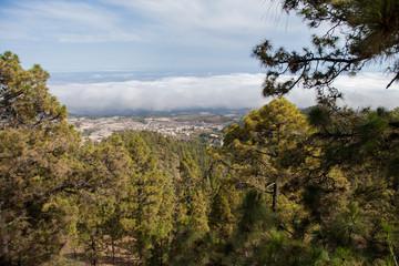 На острове Тенерифе / On the island of Tenerife