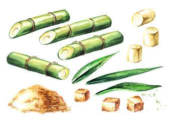 Sugar cane elements set. Watercolor hand drawn illustration isolated on white background
