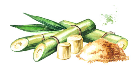 Sugar cane with brown sugar composition. Watercolor hand drawn illustration isolated on white background