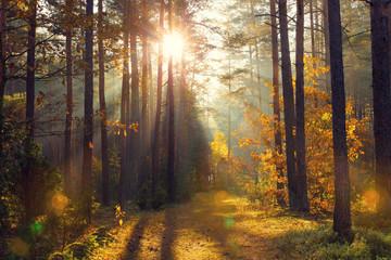 Bright golden sunbeams