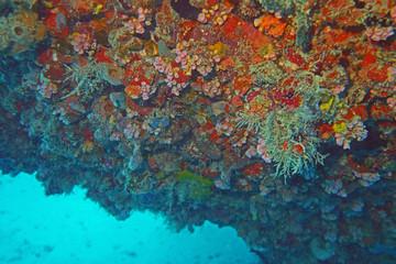 Wreck Coral BVI