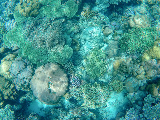 Tropical sea coral reef landscape in turquoise water. Coral reef underwater photo. Tropical sea shore snorkeling