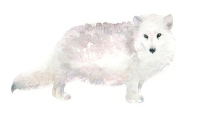 watercolor isolated illustration of arctic fox, polar animal drawing of Antarctic painted with paints on a white background