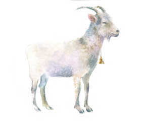 watercolor isolated illustration of a goat, hand-painted pet paints, farm livestock and domestic animal