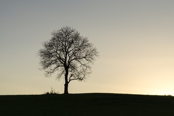Silhouette of a person playing with a dog under the tree. Slovakia