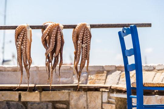 Octopus drying in the sun  Mediterranean Octopus in Santorini island, Greece