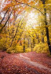 Forest in the fall with yellow and red trees and sun