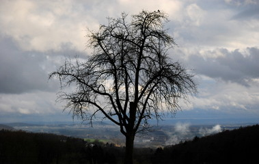 Solitude tree on a hill