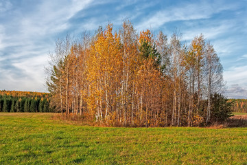 Autumn rural landscape mowed meadow on the background of trees with colorful foliage