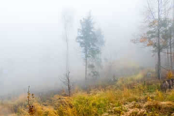 Colorful trees with autumn landscape in mountain with fog, Celadna, Beskids, Czech Republic